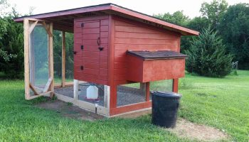 The Best Backyard Chicken Coop