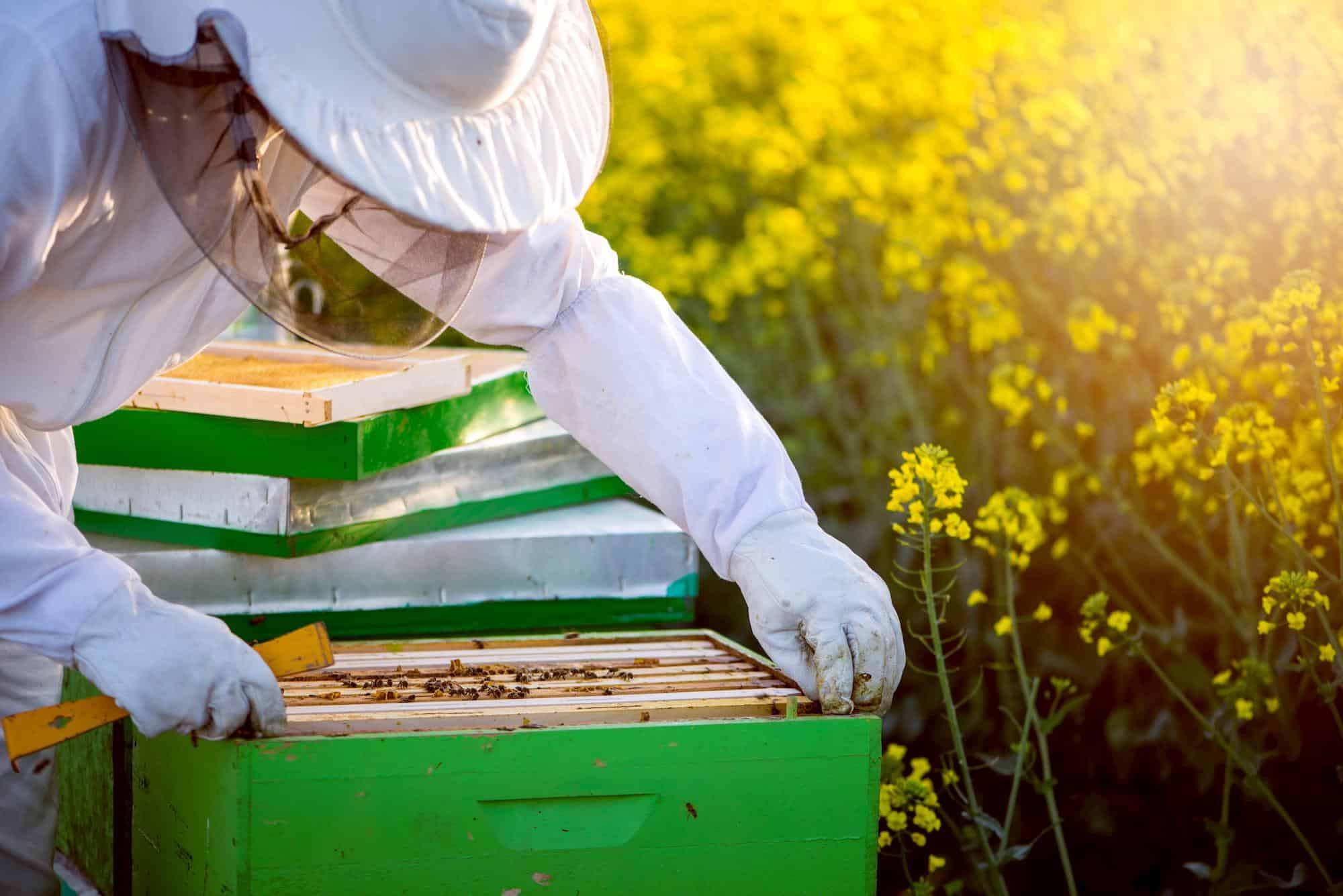 Beekeeper in a bee suit