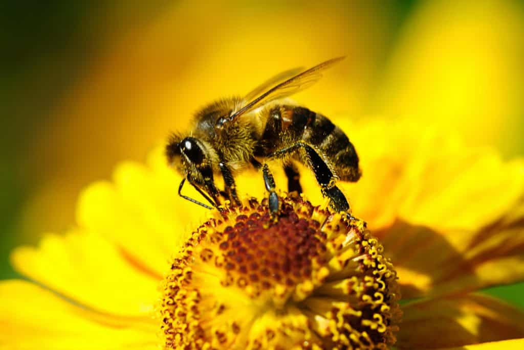 What Does a Honey Bee Do?
