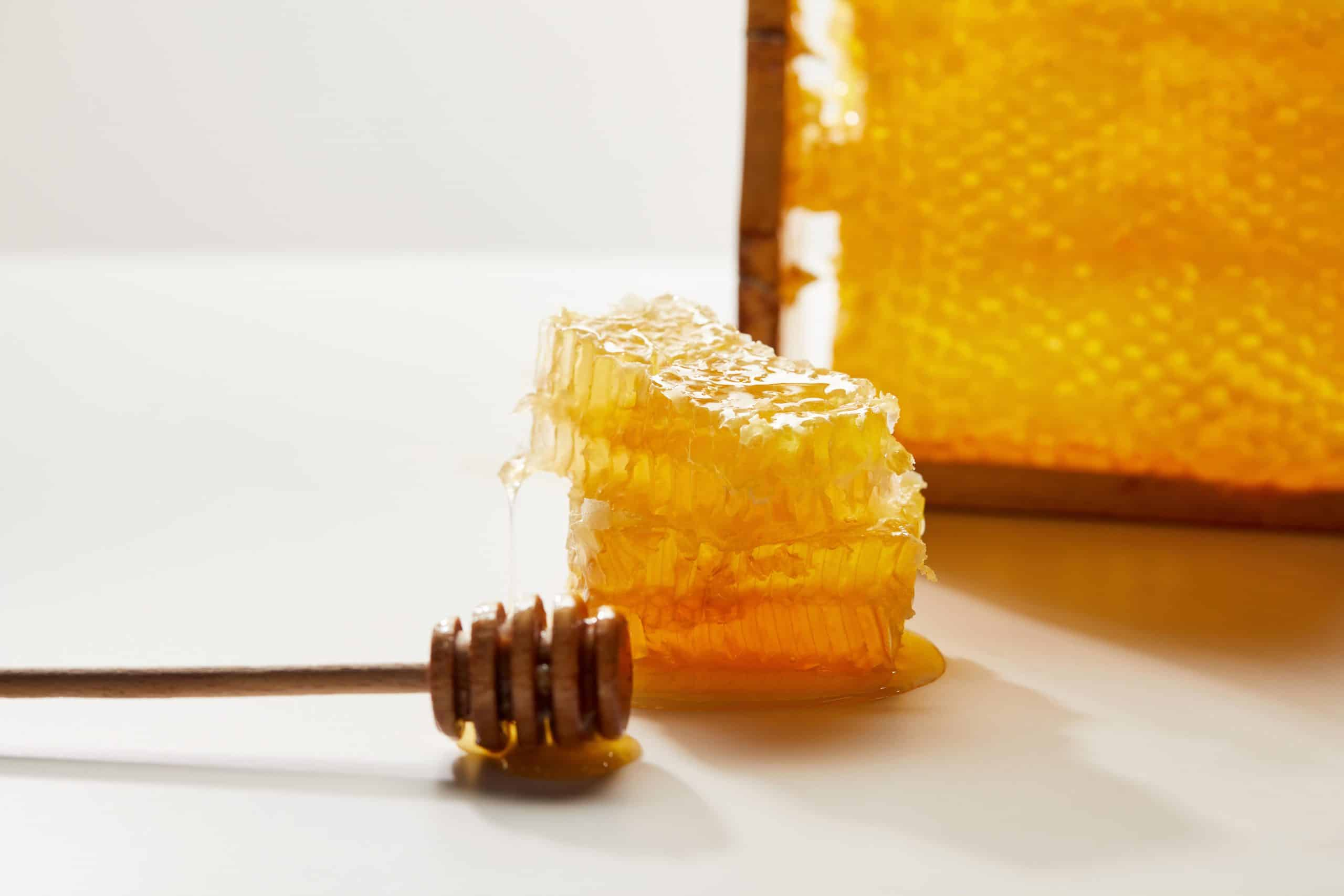The Best Honey Refractometers for Serious Beekeepers