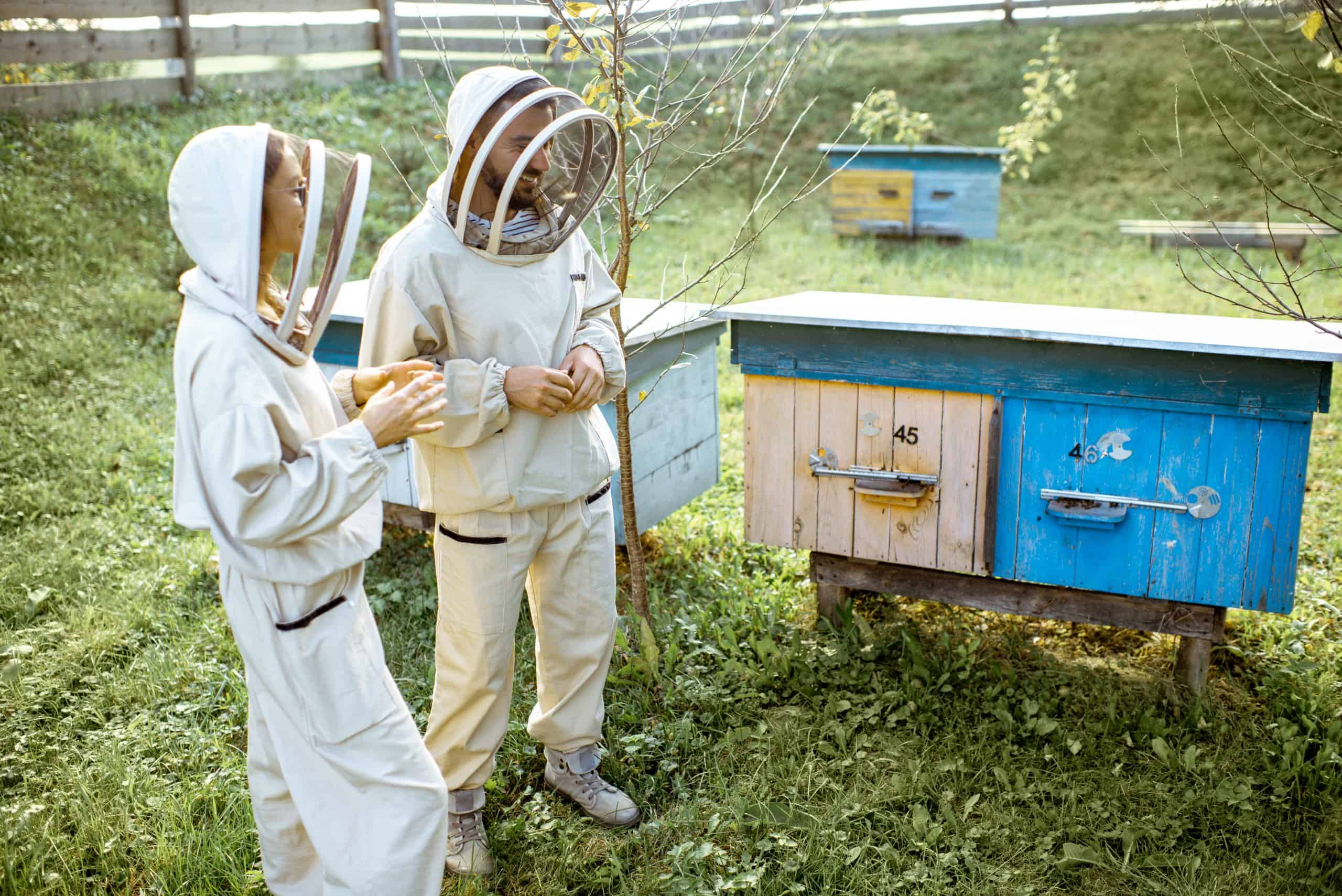 beekeepers tending to the hives