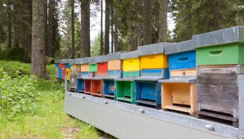 The Best Bee Hive Stands