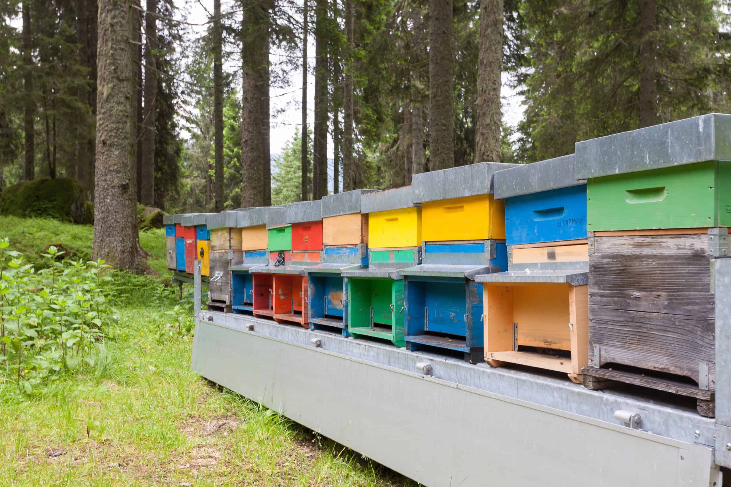 bee hive stands