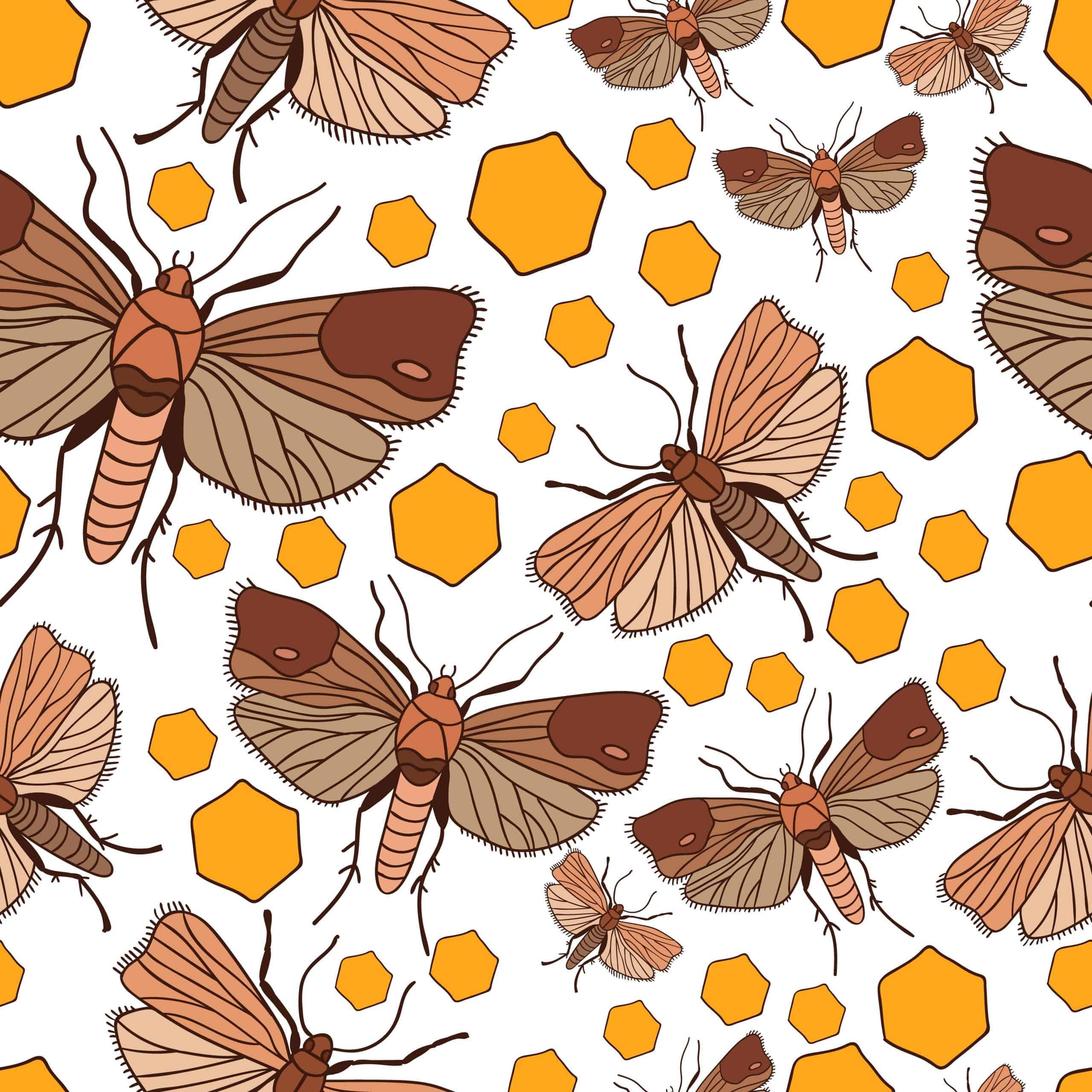 wax moth traps